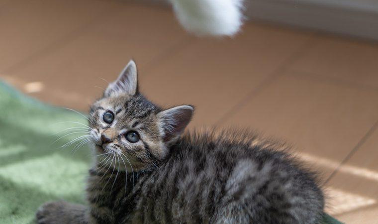 土壁に猫は大丈夫?ボロボロにされないための対処法