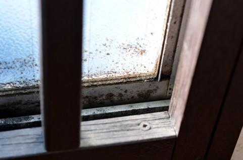 自然素材の家にカビ?きちんと換気して生えない環境を!